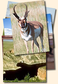 Boreen Ranch - Pronghorn - Big Horn Lake